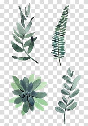 Peinture à l'aquarelle Dessin Illustration de plantes, feuilles d'aquarelle, quatre feuilles vertes assorties png