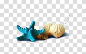 sarcelle à côté de deux coquillages, coquillages et étoile de mer png