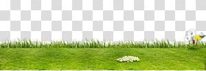 pelouse verte, pelouse écologique, pelouse artificielle, gazon artificiel png