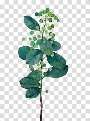 Feuille aquarelle, aquarelle feuilles, peinture végétale verte et blanche png
