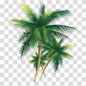 Arbre de noix de coco, arbre de noix de coco exquis, illustration de trois palmiers de noix de coco png