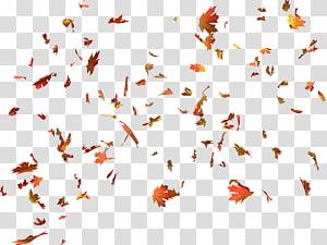 feuilles d'érable, couleur des feuilles d'automne couleur des feuilles d'automne feuille d'érable, feuilles d'automne png
