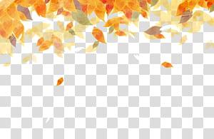 Couleur des feuilles d'automne Couleur des feuilles d'automne Peinture à l'aquarelle, belle feuilles d'automne aquarelle, illustration des feuilles orange png