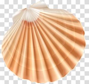 Coquille de coquillage, coquille de mer, illustration de coquillage beige et blanc png