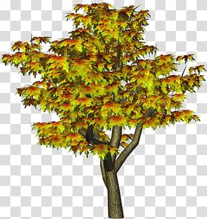 arbres verts bruns, arbre automne, arbre automne png