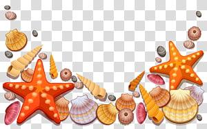 Étoile de mer, coquillages et illustration de conque, Seashell Starfish Beach, Seashell png