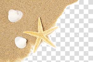 étoile de mer et deux coquillages blancs sur le sable, plage de la Concha Coquillage Starfish Seashell Sable, étoile de mer png