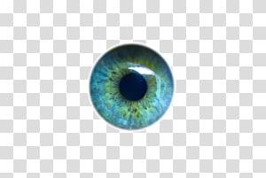 œil vert et bleu, œil humain léger Iris Élève, yeux png