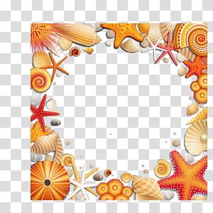 illustration de coquillages, Seashell Seaside Resort, Shells Starfish Border png