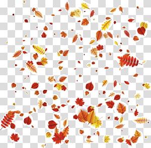 chute des feuilles d'automne, motif floral pétale motif orange, feuilles d'automne tombant png