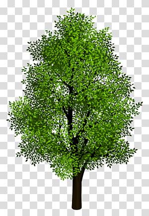 Projection isométrique, arbre vert, arbre à feuilles vertes png