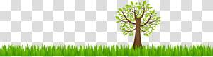 arbre à feuilles vertes au bord de l'herbe, environnement naturel de la Terre, environnement naturel png