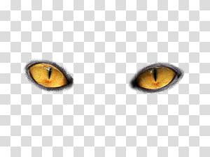 paire d'yeux de chat jaunes, oeil de chat lumière, yeux png