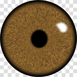 œil humain brun, lentille oculaire GIMP Iris, œil png