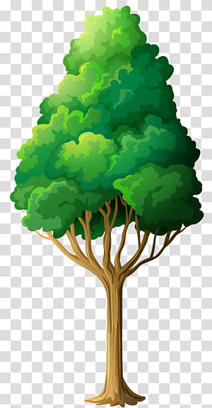 , Arbre vert, illustration arbre à feuilles vertes png