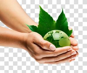 personne détenant une plante, Gestion des ressources environnementales Environnement naturel Développement durable Organisation de la durabilité, Tenir la terre verte png