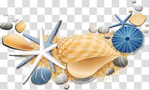 étoile de mer blanche et bleue et coquille, conque Seashell Starfish, étoile de mer png