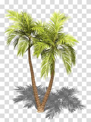 palmier, palmier palmier d'Asie Arecaceae Sprite Tree Projection isométrique, sprite png