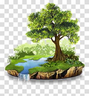 illustration d'arbre vert, ressource naturelle conservation nature environnement naturel, nature png