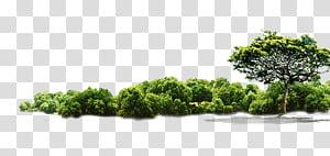 Tree Jungle, illustration de l'arbre, des arbres et des buissons verts png