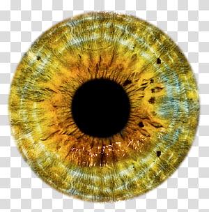 iris brun et noir, Oeil, Oeil d'or png