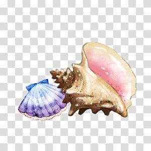 ornements de coquille beige et violet, escargot de mer Conque de coquillage, coquillages et conque png