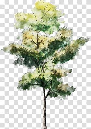 Arbre Aquarelle Dessin Dessin Architecture Croquis, arbres, illustration de l'arbre à feuilles vertes et jaunes png