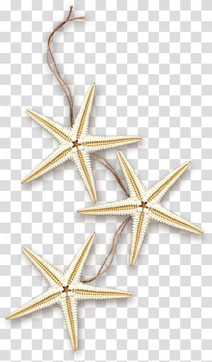 trois étoiles de mer blanches illustration, Starfish Sea Marine, étoile de mer png