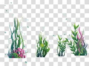 Algues, algues marines, algues vertes et alvéoles png