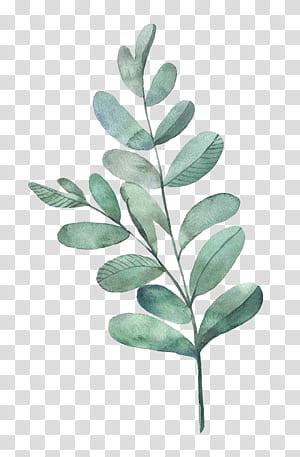 Peinture à l'aquarelle Illustration de feuilles, feuilles d'aquarelle, plante à feuilles vertes png