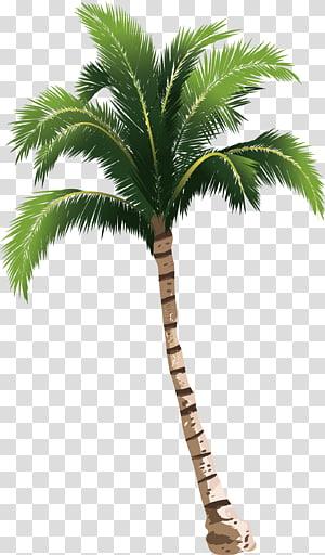 Un cocotier, illustration d'un arbre vert png