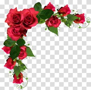 Bouquet de fleurs rose, fleurs de mariage, illustration de cadre roses rouges png