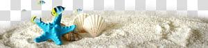 étoile de mer bleue et art de coquillage beige, étoile de mer euclidienne, éléments décoratifs d'étoile de mer tropicale png