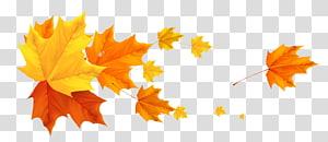 illustration feuille d'érable, automne, feuilles d'automne déco png