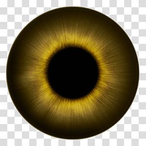 Globe oculaire, œil humain Iris Texture Couleur des yeux, yeux png