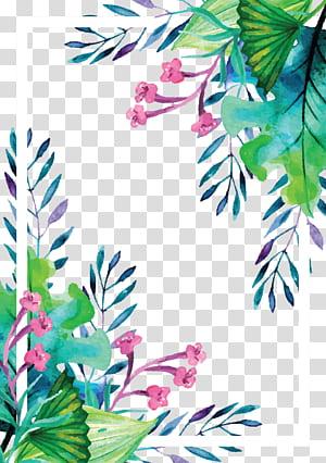 Euclidien, bordure de plante peinte à la main aquarelle plante d'été, peinture du cadre de fleurs png