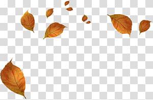 chute des feuilles séchées brunes, feuilles d'automne png
