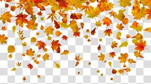 Couleur des feuilles d'automne, feuilles d'automne, illustration de feuilles d'érable png