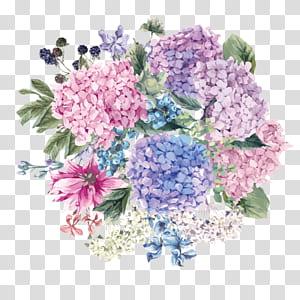 Hydrangea petiolaris Faire-part de mariage Fleur de fleur, aquarelle peinte à la main, peinture florale pourpre, rose et orange png