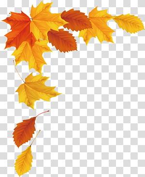 illustration de feuilles d'érable orange et jaune, feuille d'érable automne, automne png