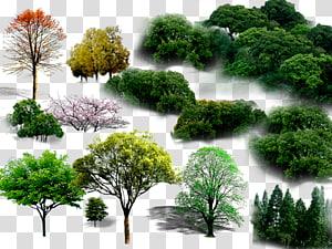 Collage d'arbres verts png