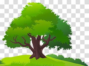 arbre vert, pelouse d'arbre, arbre et herbe png