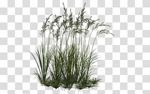 Icônes d'ordinateur Herbe ornementale, Collection Herbe, herbe verte png