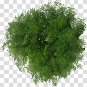 Arbre Plan Visionneuse de fichiers, vue de dessus d'arbre, feuilles vertes png