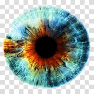 oeil len, Iris Human eye Couleur des yeux, yeux png