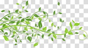 Feuille, décor de printemps avec feuilles, illustration de feuilles vertes png