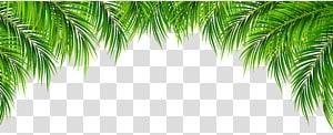Arecaceae Leaf, Palm Leaves Decor, plante feuille verte png
