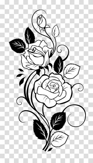 illustration de la fleur blanche, dessin rose vigne, rose png
