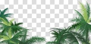 Arecaceae Leaf Areca palmier, palmier vert, palmier vert png
