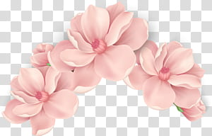Fleurs roses Fleurs roses, fleurs roses peintes à la main, fleurs pétales roses png